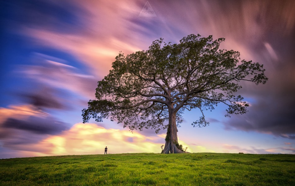 ©Iso100 Photography: Big Tree, Kiama